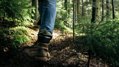 Сорок человек заблудились в подмосковных лесах с начала года