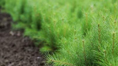 Стратификация семян началась лесных питомниках Подмосковья