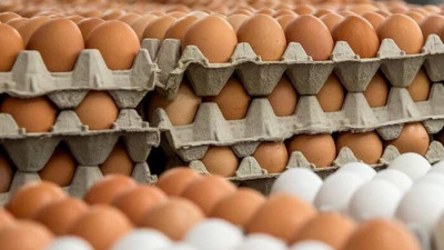 Свыше 35 млн штук куриных яиц произвели в Подмосковье за I квартал 2021 года
