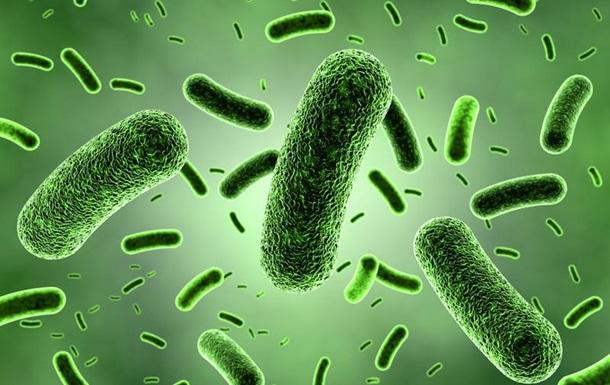 Ученые описали самую древнюю бактерию на Земле