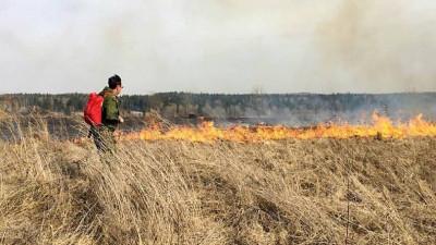 В подмосковных лесах объявлен пожароопасный сезон