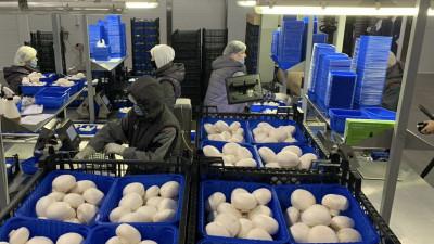 Более 2,5 тыс. тонн грибов произвели в Подмосковье с начала года