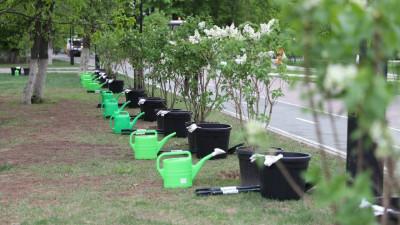 Более 41 тыс. деревьев и кустарников высадили в Московской области в рамках акции «Лес Победы»