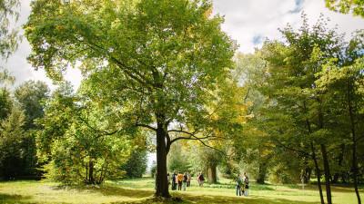 Исторический сад высадят в усадьбе Достоевского в Даровом