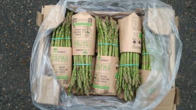 Сбор урожая спаржи начался в подмосковном хозяйстве «ЭКОломна»