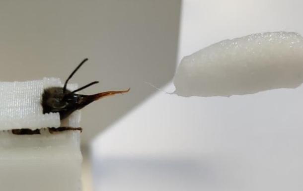 Ученые научили пчел выявлять коронавирус по запаху