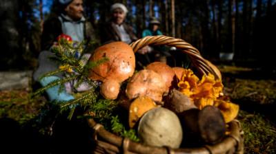 Грибники и корзина с грибами