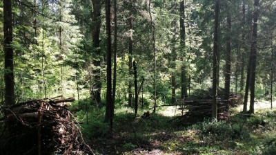 Санитарно-оздоровительные мероприятия в лесах Подмосковья
