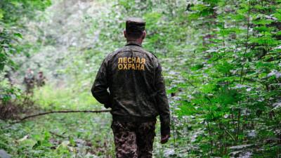 Итоги контрольно-надзорной деятельности подвели в Комитете лесного хозяйства Подмосковья