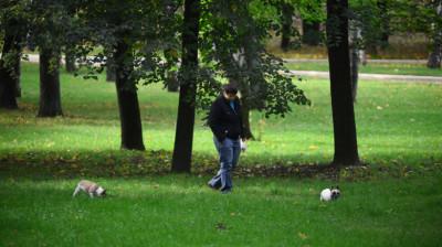 Мужчина выгуливает собак в парке