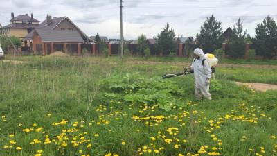 Первый этап мероприятий по борьбе с борщевиком завершился в Подмосковье