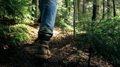 Почти 30 человек потерялись в лесах Подмосковья в июне