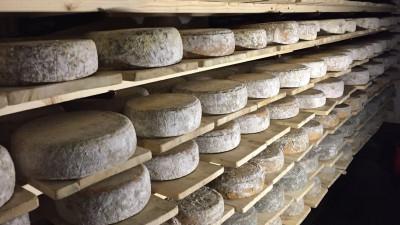 Подмосковные производители сыров и мороженого приступили к маркировке продукции