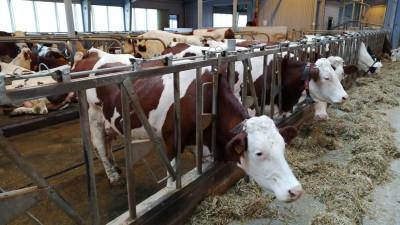Порядка 104 млн рублей выделили на поддержку фермерских хозяйств в Подмосковье