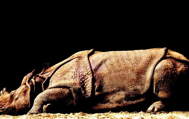 В Китае открыли новый вид гигантского носорога