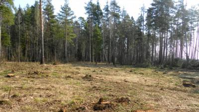 Число лесных пожаров в Московской области снизилось
