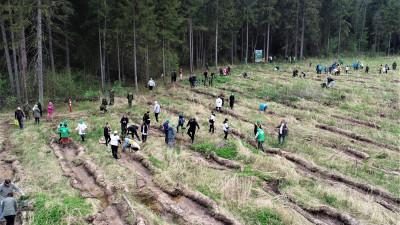 Почти 180 млн деревьев высадили за 9 лет в Подмосковье