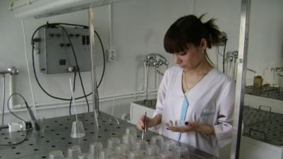 Специалисты проверили семена ели и сосны перед посевом в лесопитомниках Подмосковья