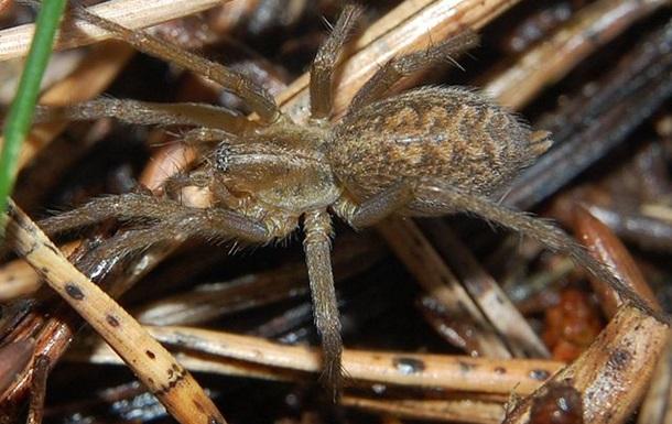 Ученые создали лекарство от инфаркта из яда пауков
