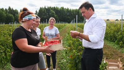 Андрей Воробьев проверил работу сельхозпредприятий в городском округе Серебряные Пруды