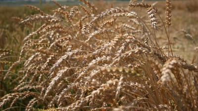 Более 180 тыс. хозяйств опрошены в первую неделю сельскохозяйственной микропереписи в Подмосковье