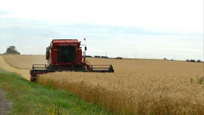 Более 40 % зерновых и зернобобовых культур собрали в Московской области