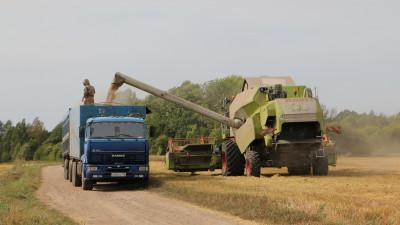 Более 60 % зерновых культур убраны в Подмосковье