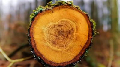Незаконную рубку деревьев пресекли Рузском округе