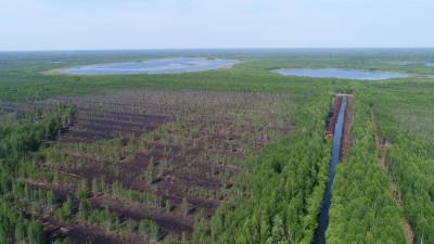 Обводнение торфяных разработок проведут в лесах Подмосковья