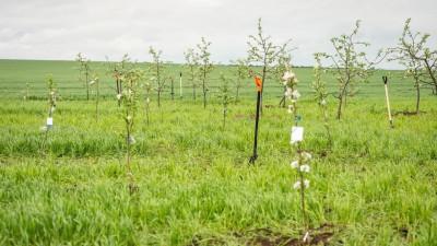Порядка 130 саженцев яблонь для производства пастилы высадили в Зарайске