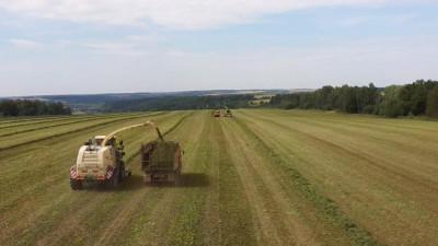 Порядка 800 тыс. тонн сенажа для скота на зиму заготовили в Подмосковье