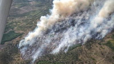 Пожар ликвидирован на территории Луховицкого лесничества