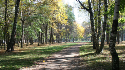Городской парк в Солнечногорске