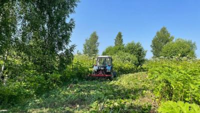 Третий этап работ по борьбе с борщевиком завершается в Московской области