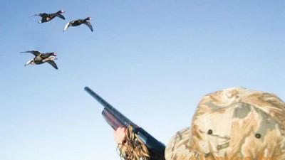 Жителям Московской области напомнили, что нужно для охоты в регионе