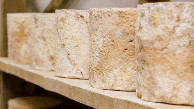 Более 14 тонн сыра произвела подмосковная сыроварня «Альдини» с начала года