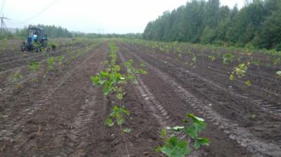 Более 20 тыс. растений высадят в Ивантеевском лесопитомнике осенью
