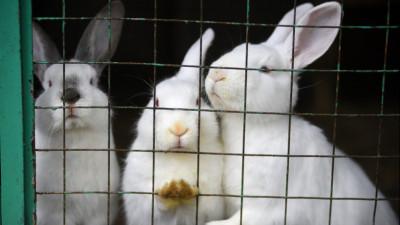 Кролики в центре реабилитации диких животных «ПРОСТАР+» Департамента природопользования и охраны окружающей среды города Москвы.