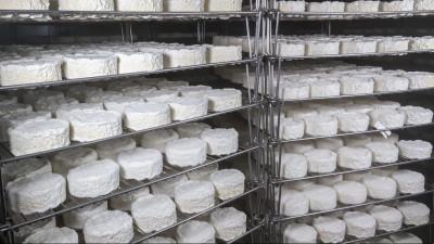 Первую очередь модульной сыроварни в Чехове запустят 24 сентября