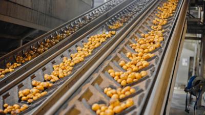 Подмосковье лидирует по объему производства продуктов переработки картофеля