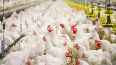 Более 42 тыс. исследований на птичий грипп проведено ветврачами Подмосковья