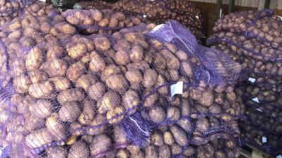 Картофелехранилище на 11 тыс. тонн семенного картофеля в Талдоме принимает новый урожай