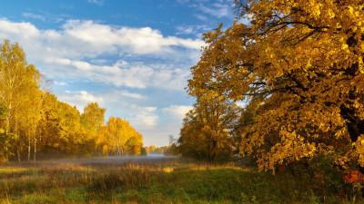 План проверок на 2022 год сформирован Комитетом лесного хозяйства Подмосковья